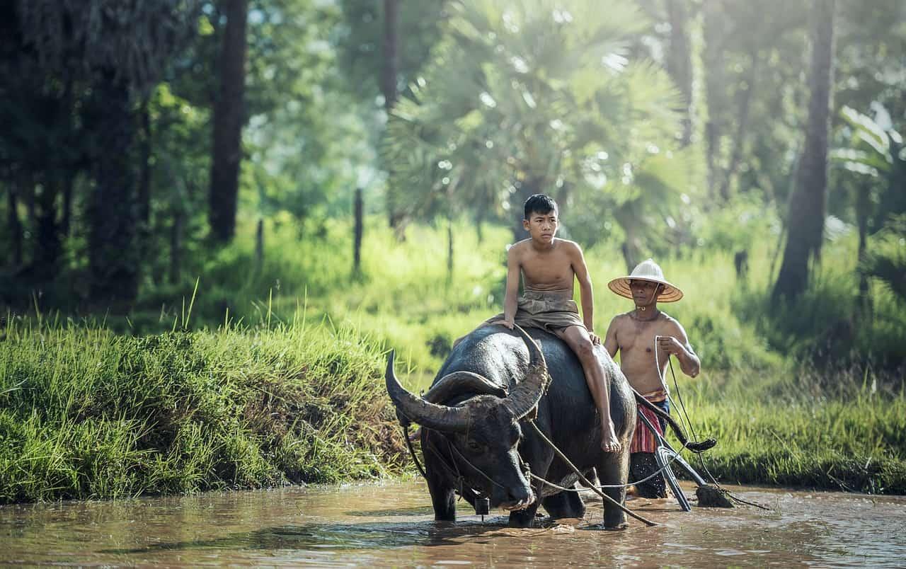 תאילנד ראשית