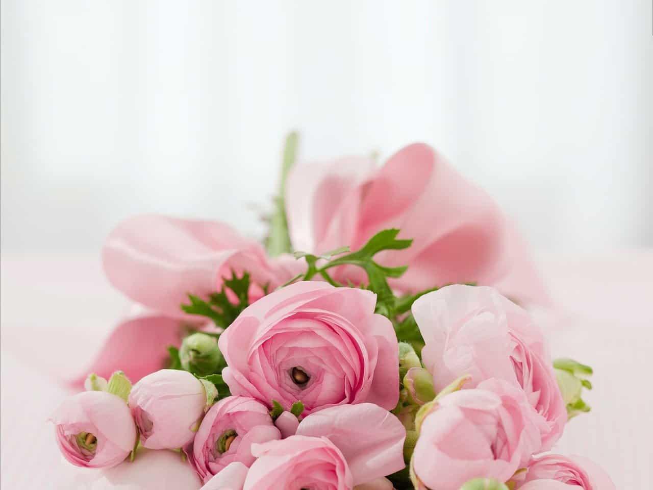 פרחים ראשית
